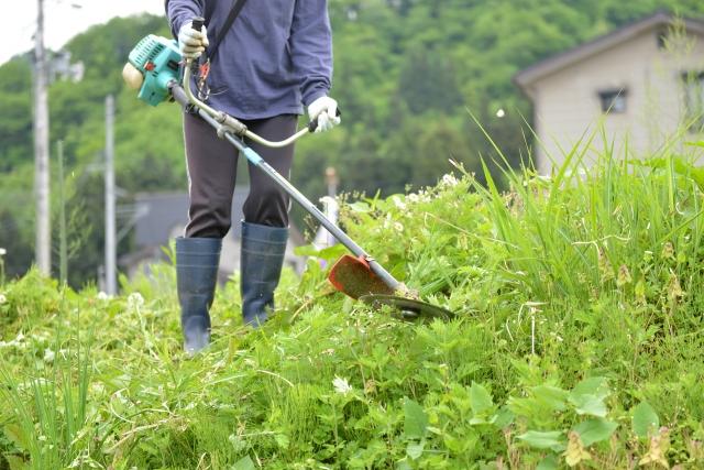 松山市で草刈りに最適な年3回の時期~楽に草刈りを終えるコツまで徹底解説